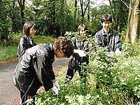 福嶋先生に教えていただいた野草を採集
